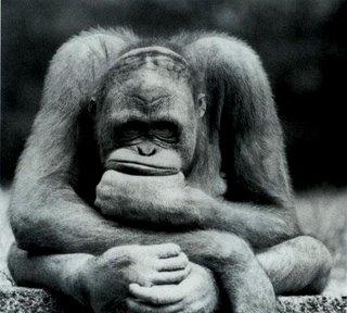 Imaxe dun mono moi confundido (como nós neste momento).